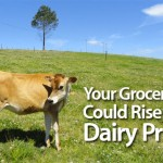 Your Grocery Bill Could Rise with Dairy Prices