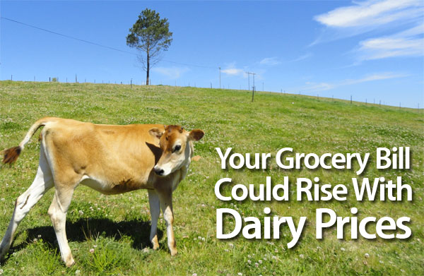 grocery-bill-dairy-prices